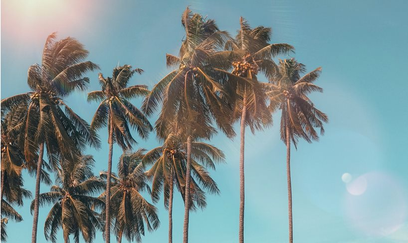 Palms on blue sky with sun light